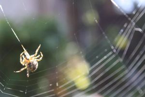 Spider by Atlantic-crab-meaT