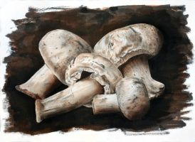 Mushrooms by jsalozzo