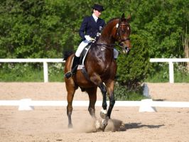 Bay dressage warmblood by wakedeadman