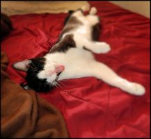 Nap Time by Snappy-Cat-Images