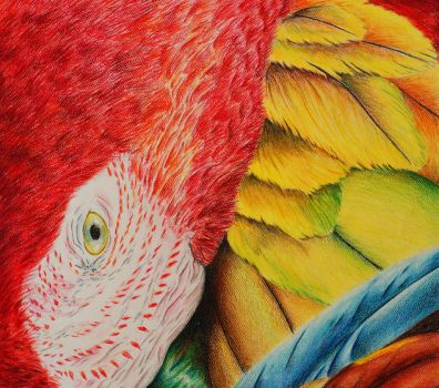 Macaw by s2up1d55