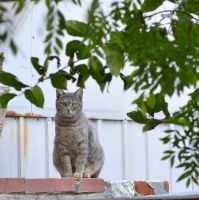Neighborhood Cat 2 by rare2bme