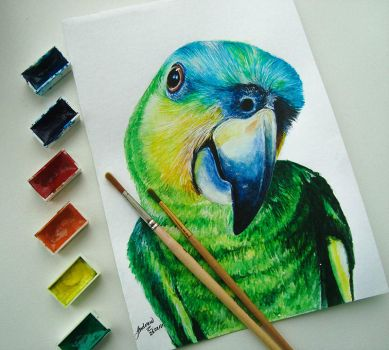 Parrot (photo version) by Andrew-Willson