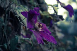 Fading on the Midnight Flower by ForeverHeavy