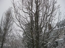 Tree in Winter by mbaqangaspaz