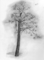 Small Pine drawing by Tankitha