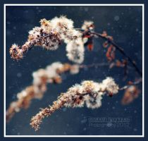 Winter's Flower by mariquasunbird1