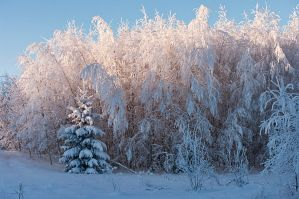 winter journal III by vonrubinstein