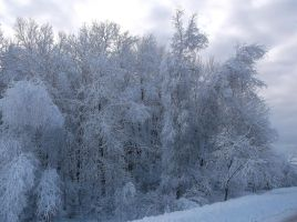 Snow Covered Trees 13 by TheGreatWiseAss
