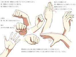 Hands Anatomy v2 by Bardi3l