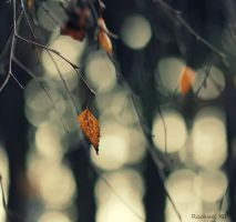 one of the last by RachaelXIII