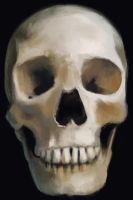 Skull Study by crazypalette