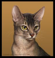 Abyssinian cat by Lilian-art