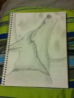 Wolf sketch i had drawn for a contest by Srbyssketching