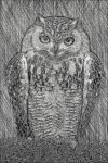 An Owl Named Westly by BxBebe95