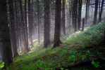 Foggy Forest II by FillyDan