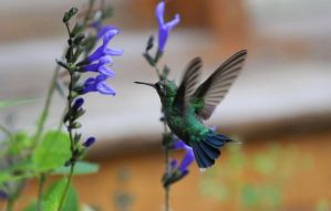 Hummingbird by MiguelRosa