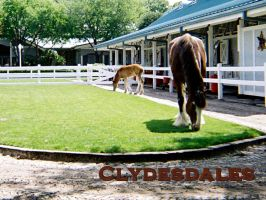 Clydesdale and Colt by dendarr