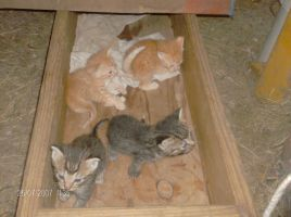 Box full of kittens by EverlastingRide