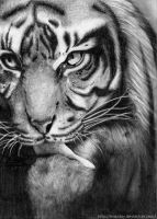 Tiger by LeapDay