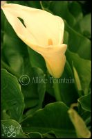 Calla Lilly 5 by gogirlanime