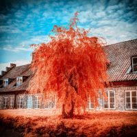 Fiery Orange Tree by myINQI