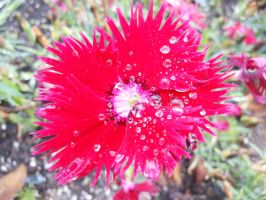 Water droplets on a flower by willow1894