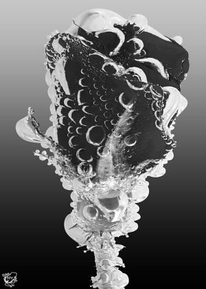 Rose Bubbles BW by FauxHead