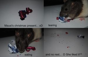 My rat's christmas present by Sasa-m-93