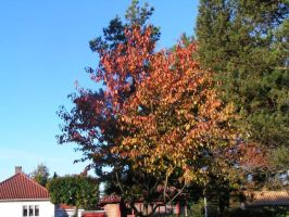 Autumn2: Perfect Colours by brego