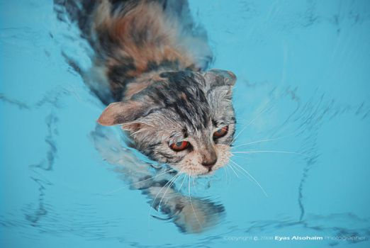 The swimmer Cat by Eyas-Alsohaim