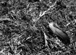 Feather 2 by arien87