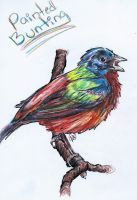Bird 08 - Painted Bunting by flamekittie84