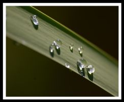 A Few Drops by jesse-botanical