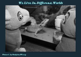 We Live In Different Worlds by DoloAndElectrik