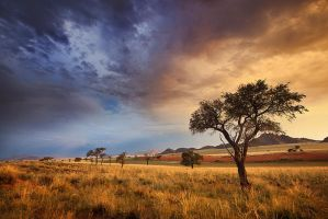 Desert afternoon II by Zefisheye
