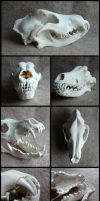 Pyrenean Mountain Dog Skull by CabinetCuriosities
