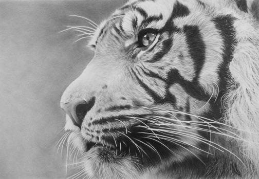 Tiger by CubistPanther
