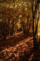 Autumn in the forest by Sunnerdahl