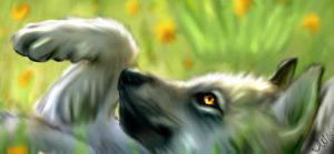 Laying Wolf PUp by LectraWhiteWolf
