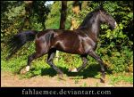 Dutch Harness Horse 1 by Esveeka-Stock