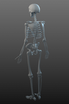 Skeleton (another view) by Temporal333