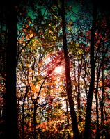 forest sun by tangleduptight