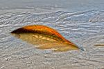 DSC 0087 Curved by wintersmagicstock