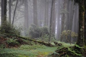 Foggy Forest 1.1 by mocking-turtle-stock