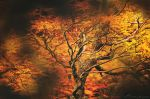L'Arbre de Feu by alexandre-deschaumes