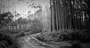 Forest Road by saka50ft