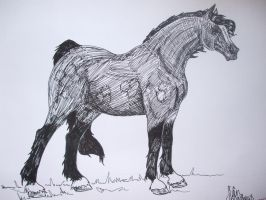 Welsh Cob, Section C by siarwenevenstar
