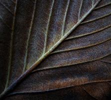 life lines 3 by awjay