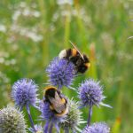Bumblebees by martine8719